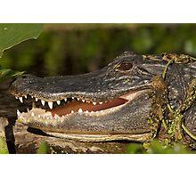 Alligator at Wekiwa Springs Photographic Print