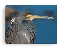 Tri-colored heron, West Lake Toho Canvas Print