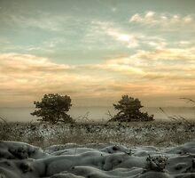 landscape by Nicole W.