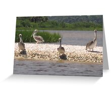 Birds 3 Greeting Card