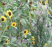 Sunflowers by reendan