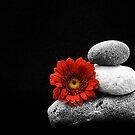 Balance by fernblacker