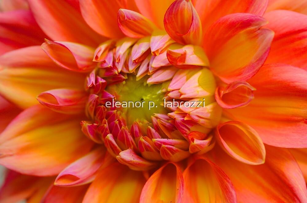 Dahlia Beauty by eleanor p.  labrozzi