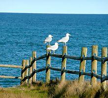 Three Little Birds by Rachel Gagne