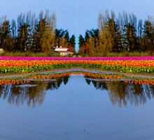 Tulip Slough by Steve Walser