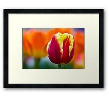Red, Orange & Yellow Framed Print