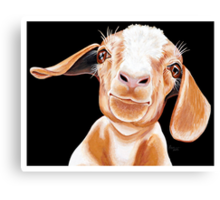 For the Love of Goats Canvas Print