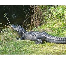 The Big Alligator Photographic Print