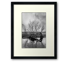 Old Tree Framed Print