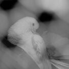 Dove by mps2000