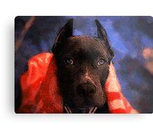 American Pit Bull Terrier Metal Print