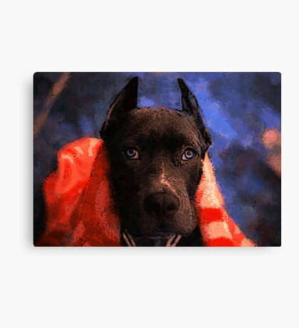 American Pit Bull Terrier Canvas Print