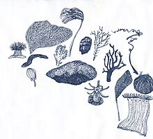 corals and seaweed by maybemary