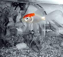 GoldFish by Carol Field