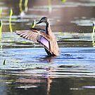 Winging by byronbackyard