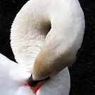 Swan by beracox
