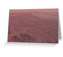 Cranberries! Greeting Card