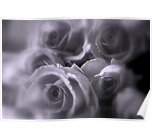 Roses in Soft Tones Poster
