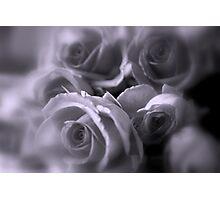 Roses in Soft Tones Photographic Print