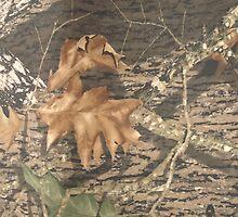 Mossy Oak Break Up by Paul Lawrence