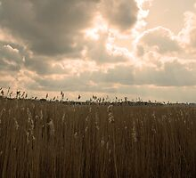 Sky Over Barley Field In Suffolk by Marian Sedwell