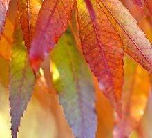 Autumn beauty by Alison Hill