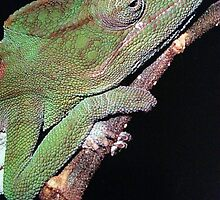 TALK ABOUT A CLOSE UP LIZARD GREETING CARD by dagokid