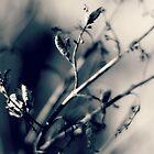 light of winter...four~ by Brandi Burdick