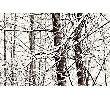 silent white tree~ Photographic Print