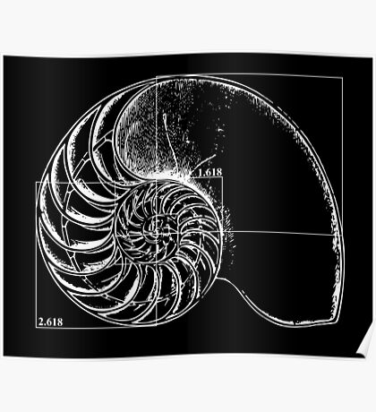 Fibonacci on a nautilus shell Poster