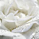 Silver Rose by Morag Bates