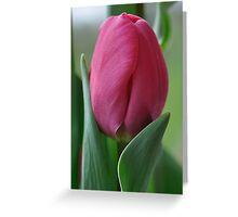 Pink Tulip ~ Tulipa Single Early Greeting Card
