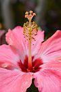 Hibiscus by ©Dawne M. Dunton
