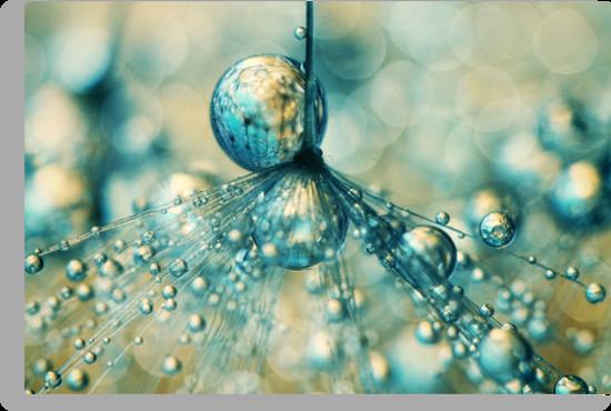 Dandy Sprinkles by Sharon Johnstone