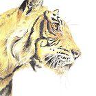 Tiger - Portrait by Colin Shepherd