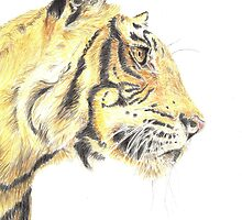 Tiger - Portrait by Colin Shepherd