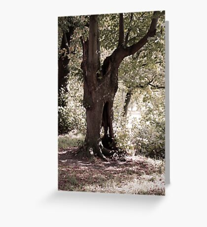 The Ghost Tree Greeting Card