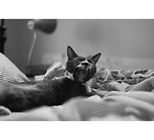 Morning Yawn Photographic Print