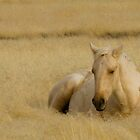 Golden Grass &amp; Golden Horse by Kent Keller