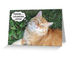 Funny Cat High on Catnip Greeting Card