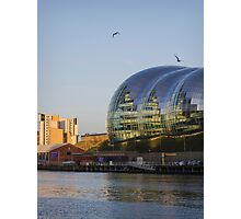 The Sage Photographic Print