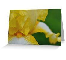 Bearded Iris ~ Iris Germanica Greeting Card