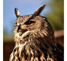 Eagle Owl at Fuerteventura Zoo Photographic Print