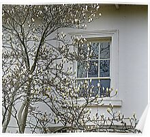 White Magnolia On White Walls Poster