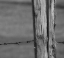 The Fence Post by vigor
