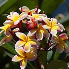 Flowers of Hawaii by gernerttl
