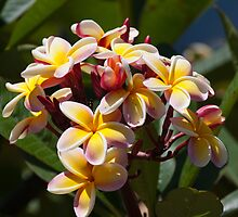 Flowers of Hawaii by gernerttl