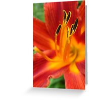 Day Lily ~ Hemerocallis Greeting Card