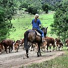 Droving - St Albans NSW Australia by Bev Woodman