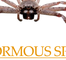 Gianormous Spiders Nature's reminders that you are, in fact, a little girl Sticker